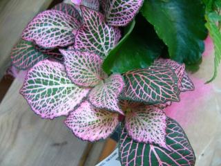 Plantes non aquatiques - Page 2 P1060818