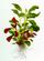 Plantes exigeantes et très exigeantes