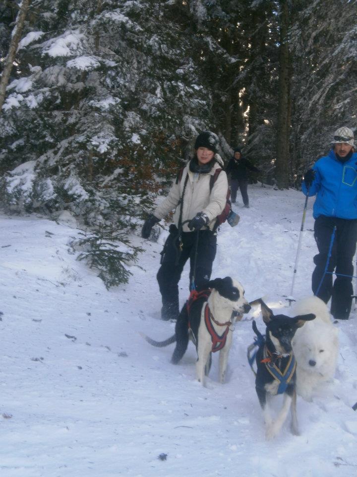 """Le team """"des chiens, des sport, une seule passion"""" - Page 5 42115810"""