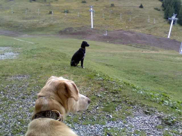 """Le team """"des chiens, des sport, une seule passion"""" P19-0910"""