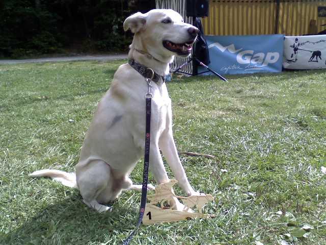 """Le team """"des chiens, des sport, une seule passion"""" P21-0910"""