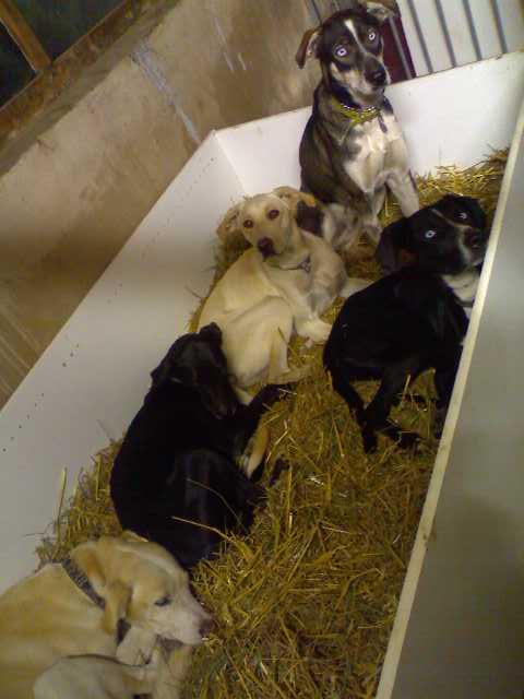 """Le team """"des chiens, des sport, une seule passion"""" P30-0910"""