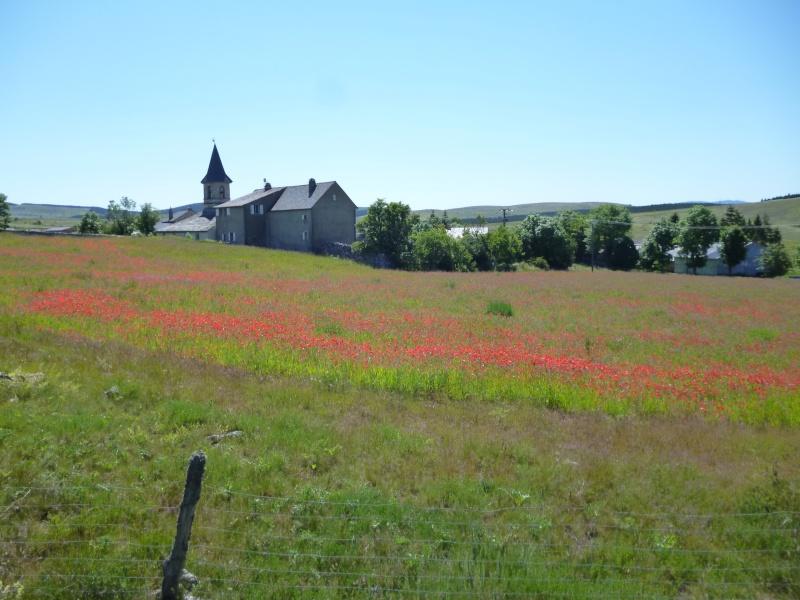 6 jours en Lozère (printemps 2012) Lozare74