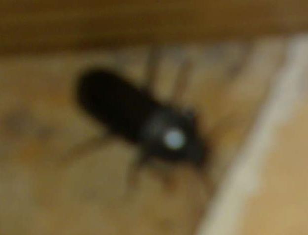 Besoin d'aide pour identification d'un insecte 14072011