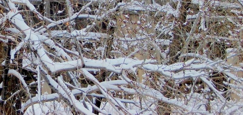 Branches Dscf5619
