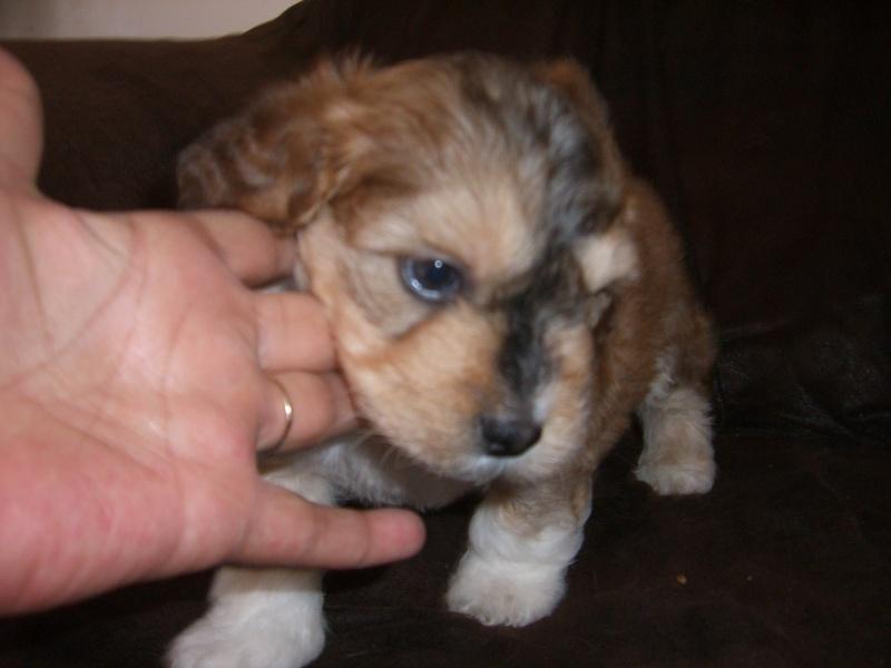 MIMI et SES PETITS tous adoptés en juin 2008 Doody110