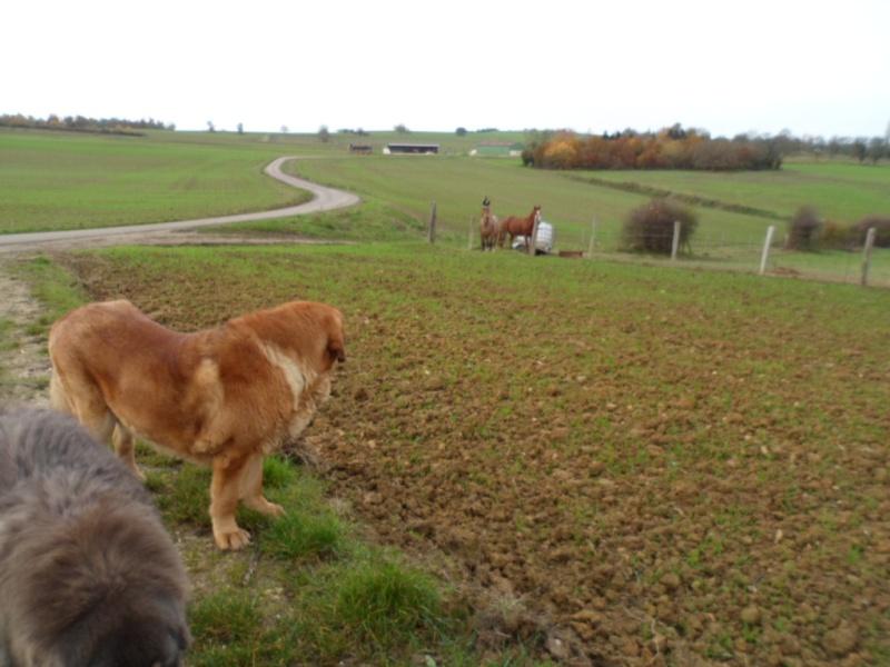 23 novembre 2012 Sam_0111