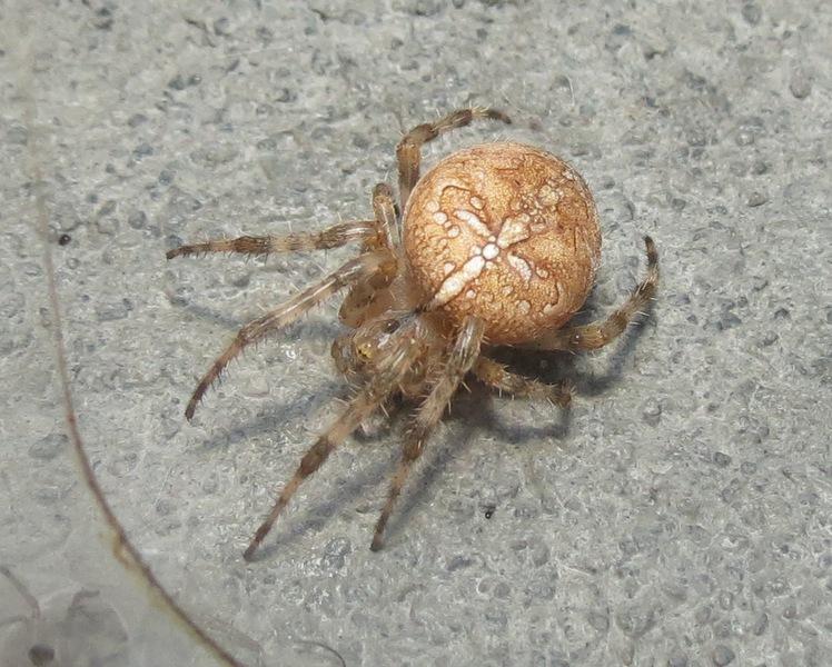 les 8 pattes - araignées et compagnie - Page 13 26_11_10