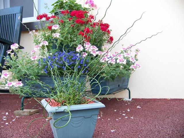 Que planter dans de grands pots en bordure de piscine 2011_448