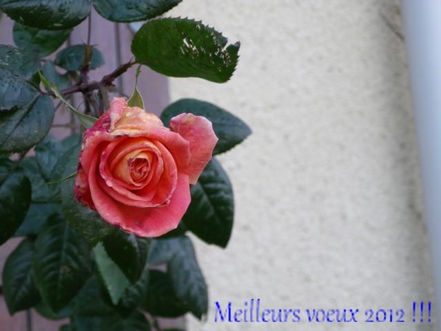Bonne Année 01012011