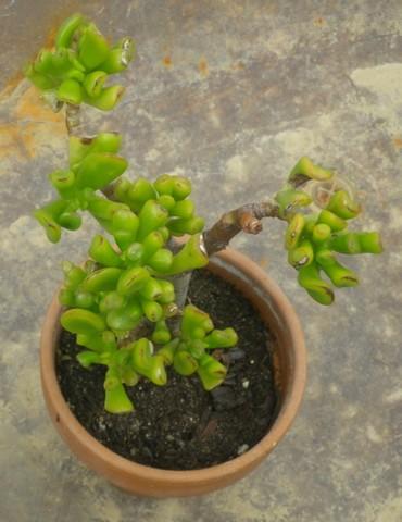 25 orchidées, succulentes, plantes épineuses, grasses 21062032