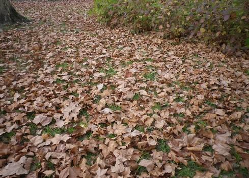 28 - Couleurs d'automne !!! - Page 5 24112013