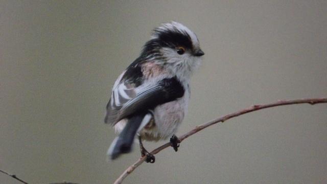 18 - Concours les oiseaux ..... oct 2011 - Page 3 _betty10
