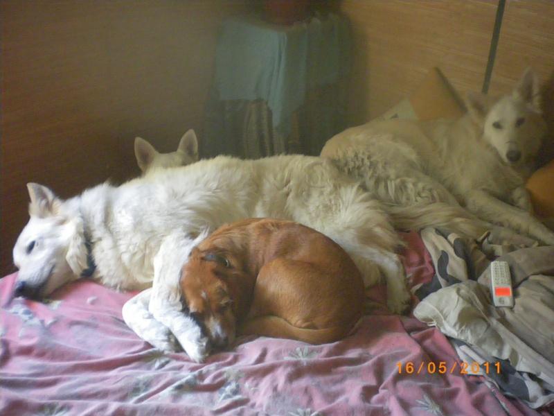 Les moments de complicité avec vos chiens  Imgp2113