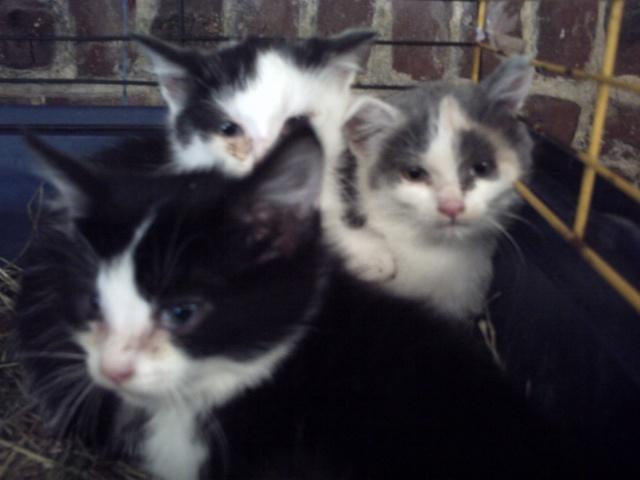 sos 3 chatons en cage pour leur éviter la mort cherchent une asso !! Animau16