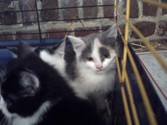 sos 3 chatons en cage pour leur éviter la mort cherchent une asso !! Animau17