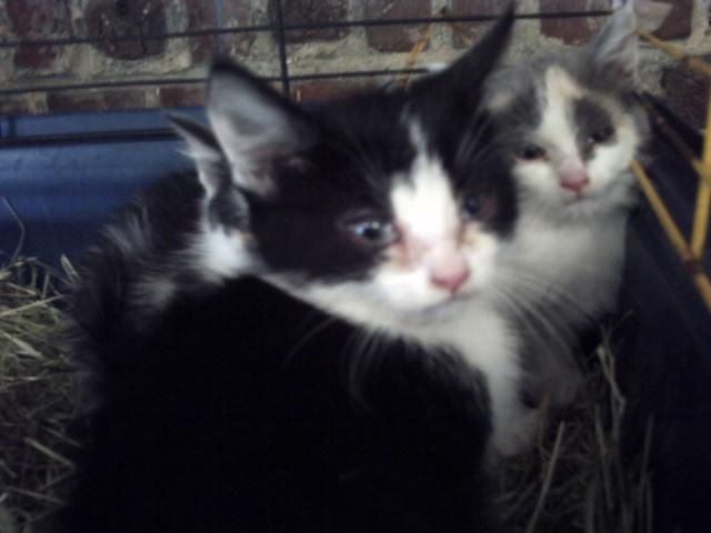 sos 3 chatons en cage pour leur éviter la mort cherchent une asso !! Animau18