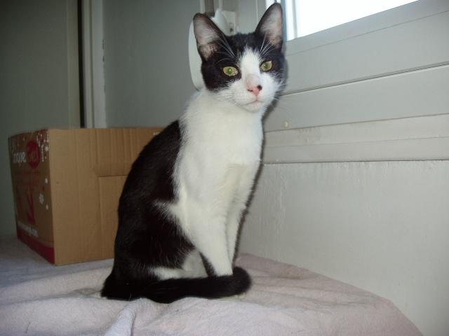 jeune chat mâle 6 mois 59 Gaya11