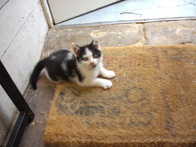 O'Malley adorable chaton 62 Pict0228