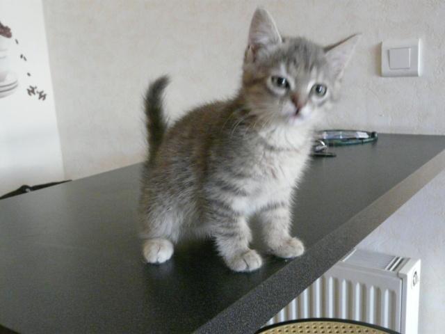 sos pour 3 chatons retrouvés en foret avant le 20 juillet Sos_au10