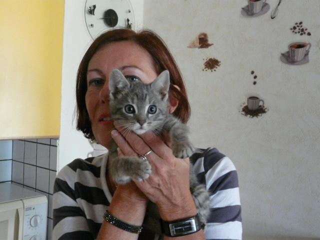 sos pour 3 chatons retrouvés en foret avant le 20 juillet Sosauc10