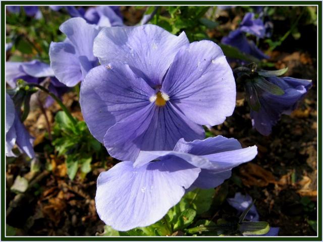 Mon p'tit coin  fleuri 1310