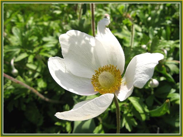 Mon p'tit coin  fleuri 811