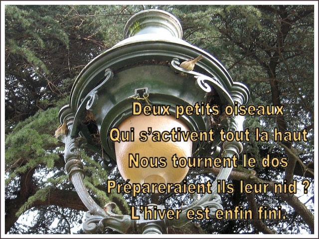Le nid ? (tanka) Le_nid10