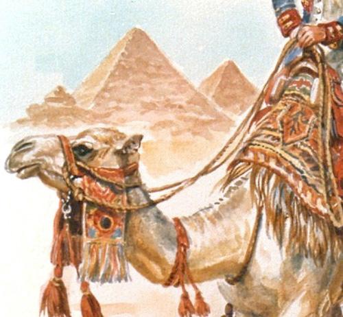 Bonaparte en Egypte à dromadaire - Page 2 Dromad12