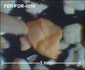 Foraminifères de FERCOURT (Oise) -forams Fer-fo23