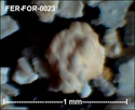 Foraminifères de FERCOURT (Oise) -forams Fer-fo32