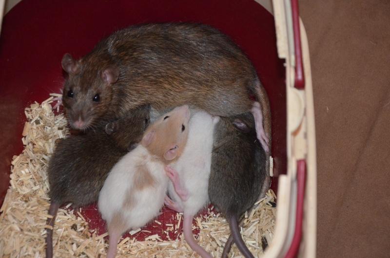 Poupoune et ses bébés [portée sauvetage] Mise à jour 09 mars Dsc_0210