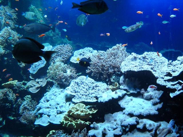 Aquarium de Monaco Musae_13
