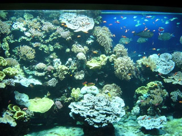 Aquarium de Monaco Musae_14