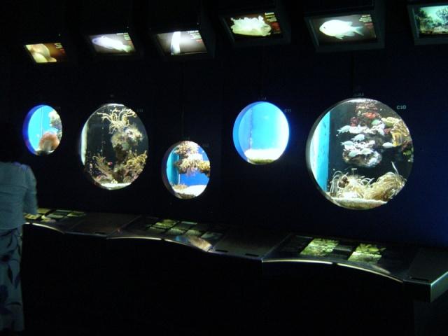 Aquarium de Monaco Musae_15
