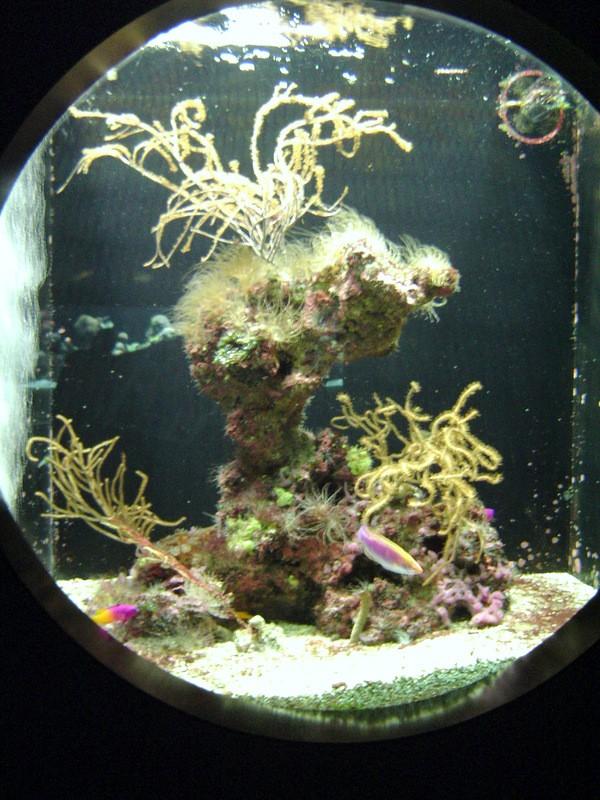 Aquarium de Monaco Musae_16