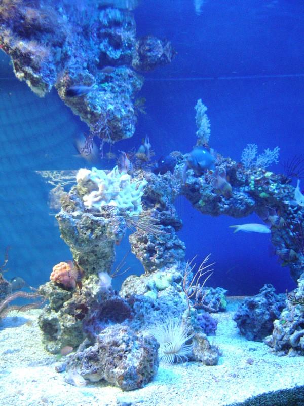 Aquarium de Monaco Musae_18