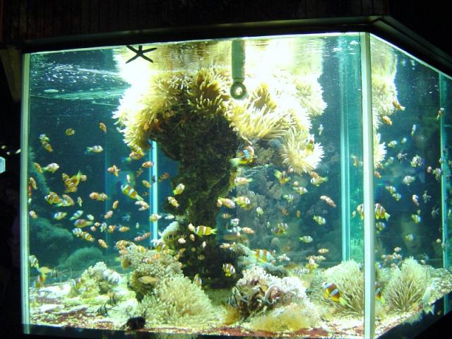 Aquarium de Monaco Musae_19