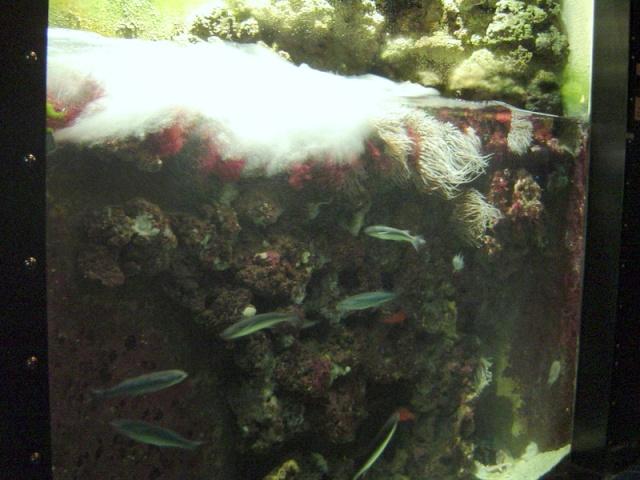 Aquarium de Monaco Musae_20