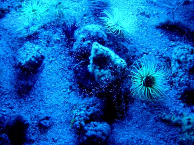 Aquarium de Monaco Musae_22