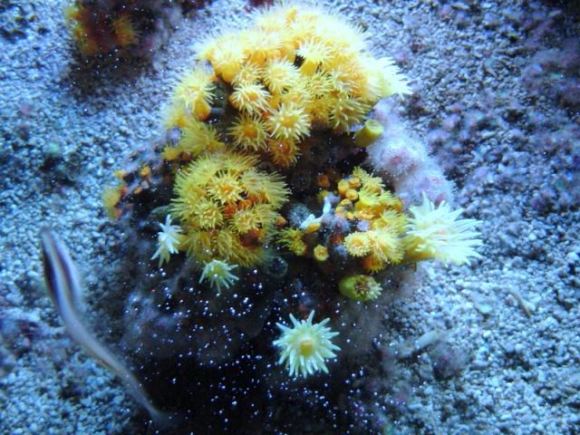 Aquarium de Monaco Musae_23