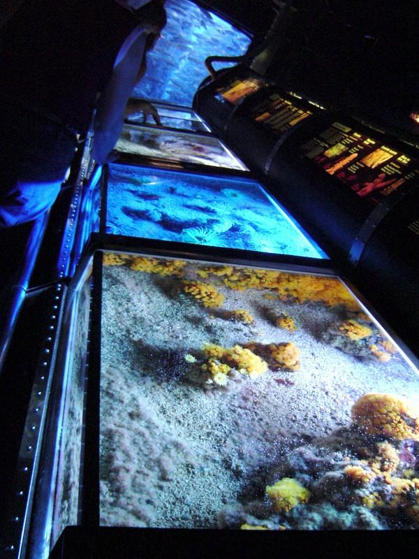 Aquarium de Monaco Musae_25