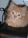 Echange de chats... - Page 4 P1010115