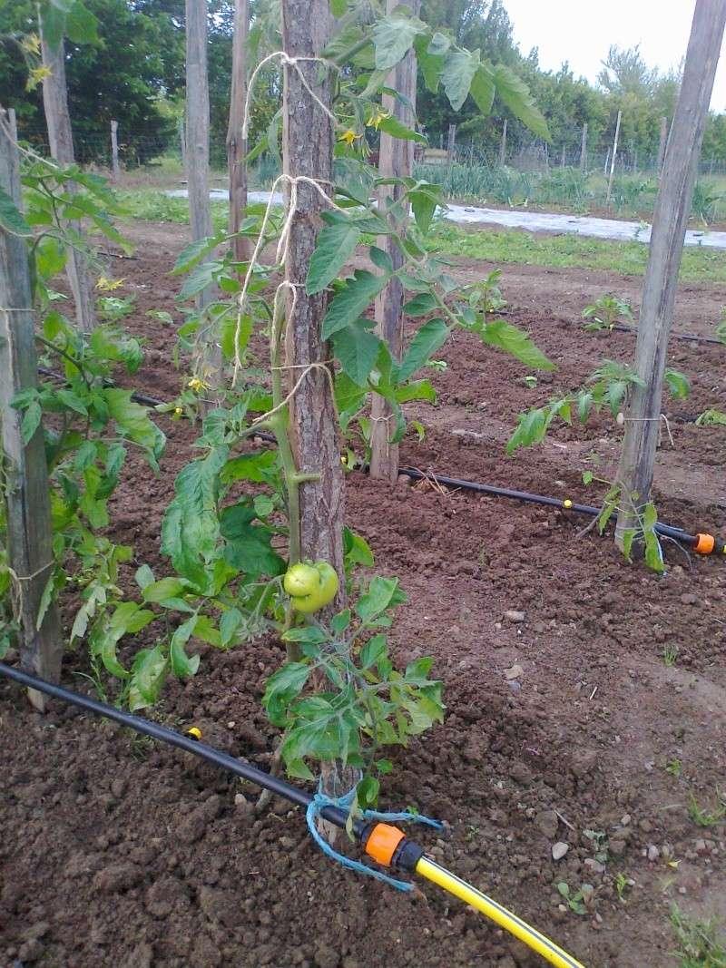 bientot il faut planter les pommes de terre