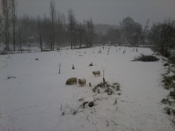quelle météo dans votre region ? - Page 2 Mouton10