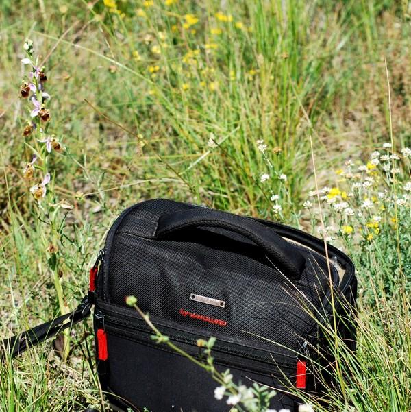 les ophrys tardifs de la région (84 et 26) Ophrys24