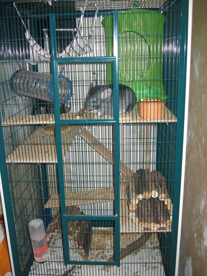 hamac ou nid en bois? Img_1710