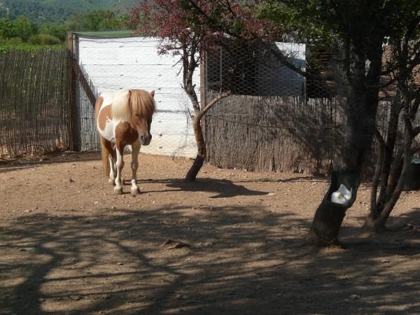 les minis chevaux de la ferme du coeur .... Mini_p11