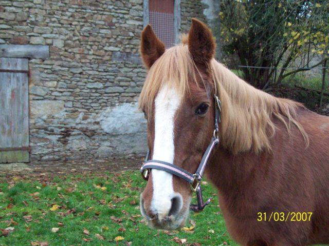 (Dpt 23) QUIDY, poney 28 ans réservé par Sabnat23 !!!!!!!! décédé De_tou11