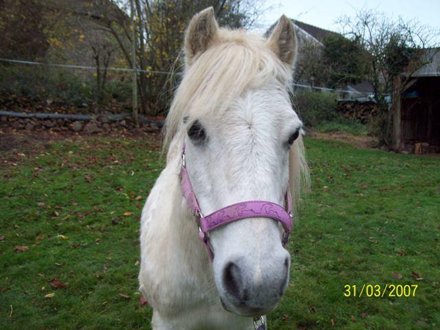 (Dpt 23) QUIDY, poney 28 ans réservé par Sabnat23 !!!!!!!! décédé De_tou12
